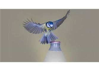 Kuş sütü nedir; gerçekte kuş sütü diye bir şey var mı?