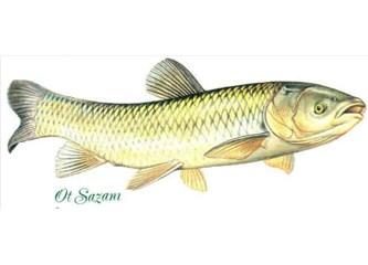 Bazen Sazan Balığı Olmakta Güzelmiş