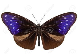 Bir Kelebek, Bir Sevda ve İki hayat