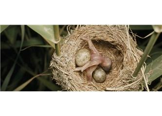 Anne Kuşun Çilesi