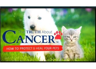 Hayvanınız Kansere Yenilmek Zorunda Değil!