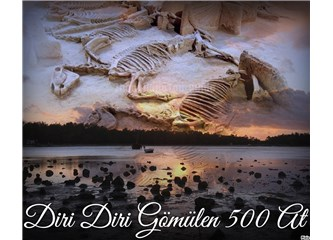 Diri Diri Gömülen 500 At