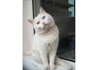 """-Eski- Kedi Bağımlısı """"Abla""""dan Bir Kedi Yazısı: Pamuk"""