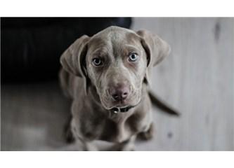 Köpeğin Adı Badi-72