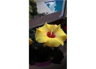 Mutluluk Çiçeklerim