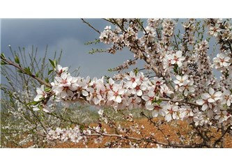 Süzme Sözcükler: (Haiku) Mevsimsiz Bahar