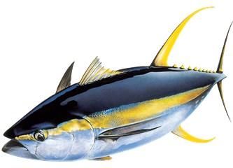 Balığının Geçmişini Öğren