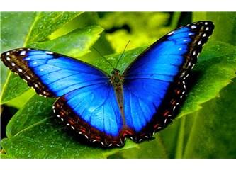 Bir Kelebek Umut ve Sevgi