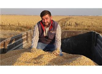Tarıma Güvenilmez, Ekmek Zararlı Dendi Buğday Ekilmiyor, Gitti Canım Konya Ovası