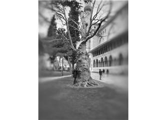 Ağaçlara Sarılmak