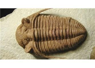 Trilobit Nedir