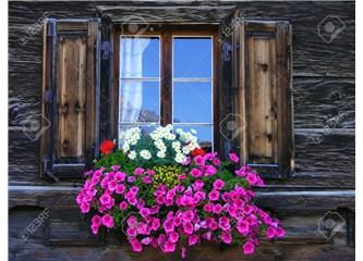 Özlem Çiçekleri
