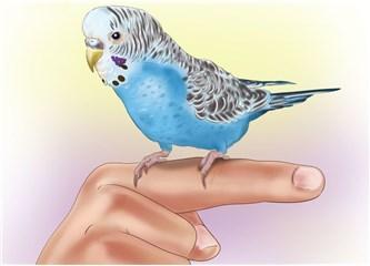 Papağan Nasıl Ele Alışır?  Eğitimi Nasıl Olmalı?