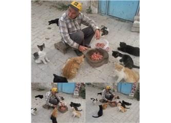 Kedi Babası…
