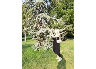 Ağaçların Enerjisi
