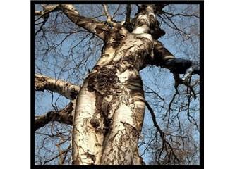 Cadde ve Sokaklardaki Ağaçlar; Meyvesi Yok Poleni Çok, Kuşlar Gibi Dallarına Yuva Yapsak Olurdu