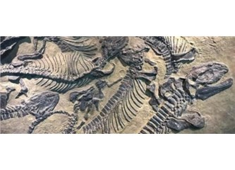 Çin'de 130 Milyon Yıllık Dinozor Fosili; İnsanın Nerede Ortaya Çıktığını Biliyor Hayvanın Bilmiyoruz