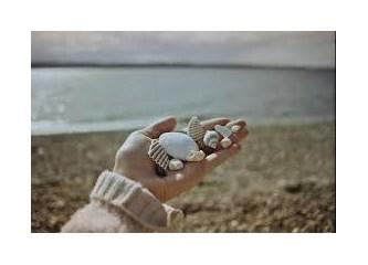 Küçük Deniz Kabuğu