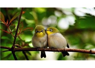 Doğada Aşk