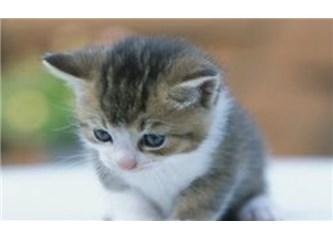 Bi Kedi Gördüm Sanki.