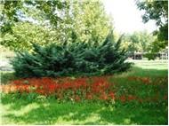 Botanik Parkı (14.09.2008)