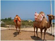 Bir Güney Yolculuğu-Mersin 2010