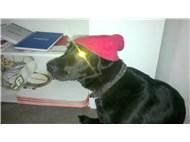 Bu hanımefendi, köpeğimiz Zeytin... Umarım sevmişsinizdir kendisini...