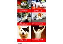 Seçim Zamanı, Kedilere  Büyük Gözaltı...