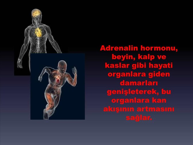 fettverbrennungs hormon