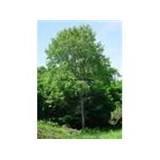 bir orman yeşili